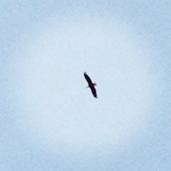 Today I saw a #baldeagle #connecticut