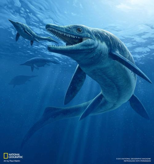 "scinerds:  'T. Rex' of the Seas Called First Top Killer  Newfound fossils of a giant dolphin-shaped reptilian predator are now shedding light on how the world recovered after the most devastating mass extinction in history, researchers say. This prehistoric sea monster could provide information on how the planet might deal with the mass extinction humans are causing now, scientists added. The giant marine predator was at least 28 feet (8.6 meters) long, fossils showed. The carnivore was recovered over a course of three weeks in 2008 from what is today a mountain range in central Nevada, and is now kept at the Field Museum in Chicago. This new species, formally named Thalattoarchon saurophagis — which means ""lizard-eating ruler of the sea"" — was an early member of the ichthyosaurs, marine reptiles that evolved from land reptiles just as modern whales did from land mammals. Ichthyosaurs cruised the oceans for 160 million years, apparently going extinct about 90 million years ago, some 25 million years before the age of dinosaurs ended. ""They were the most highly adapted of all marine reptiles, acquiring a fishlike shape and giving birth to live young,"" said researcher Martin Sander, an evolutionary biologist at the University of Bonn in Germany. Thalattoarchon possessed a massive skull and jaws armed with large teeth with cutting edges used to seize and slice prey. The researchers say it probably could have tackled victims as large as itself or larger."