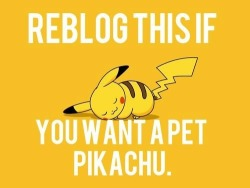 belieber-living-in-paradise:  Reblog if you want a pet pikachu. 💕