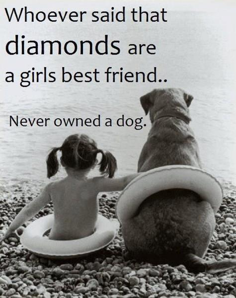 dogandpups:  Ain't that the truth! source http://www.facebook.com/MyInformationAboutDogs  Diamonds don't let me wrap my arms around them and sob