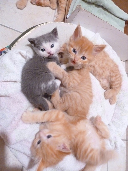 "catsbeaversandducks:  ""She followed us home, can we keep her, Mom??"" Via Pinterest"