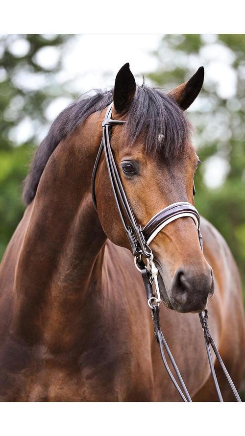 Loew Equestrian na We Heart It.