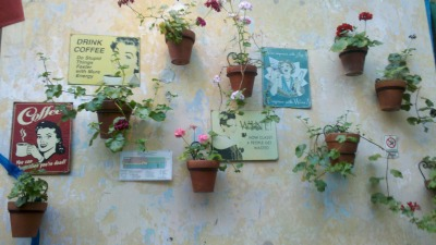 Pared de malvones / Geranium wall