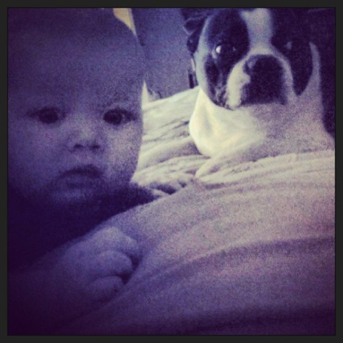 Baby and Boston! #bostonterrier