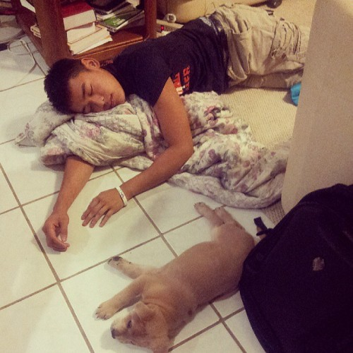 Like puppy like owner c: #cute #doggy #sleeping dawh so cute. Tuan and Thor sleeping
