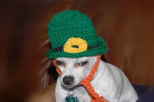 "petswhowanttokillthemselves:  ""Irish I were dead.""   - Happy St. Patty's from PWWTKT"