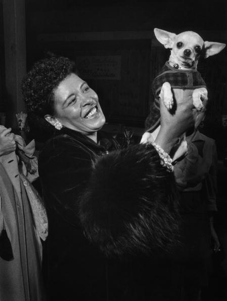 One thing is clear - Billie Holiday loved dogs! Here she is with her chihuahua, Pepi, in 1957. Photo: Bob Willoughby/Redferns.