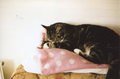 lafleurdesmurailles:  I wish I was a cat so I could sleep all day by millie clinton. on Flickr.