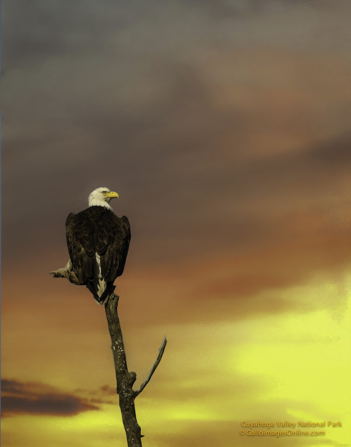 animalkingd0m:  Perched at Dusk by Mark Perry