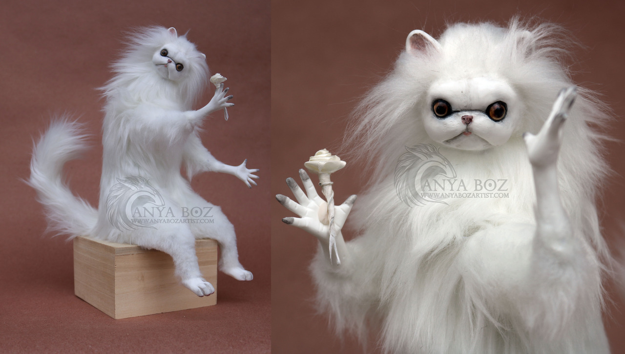 tumblr_p4nzfjB9eE1uwa4z0o1_1280 persian cat room guardian hashtag images on tumblr gramunion