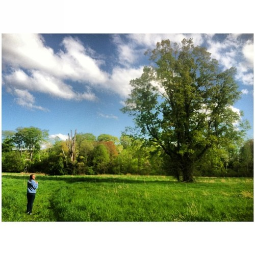 @shreen8255 in the #meadow #clouds #sky #tree