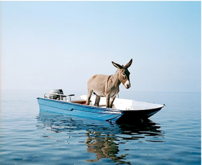 thekhooll:  A donkey on a boat By Paola Pivi  Just because.