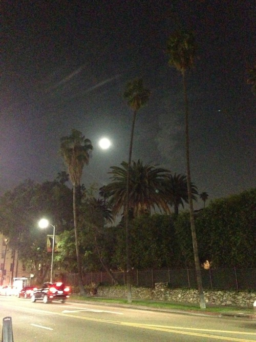 Palm Moon - no filter @bambolabambina