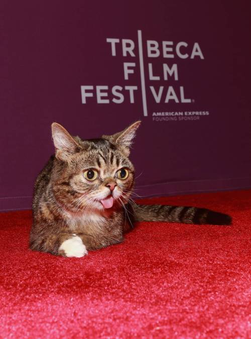 Lil Bub worked the red carpet last night. In times of chaos, we will always have famous cats.