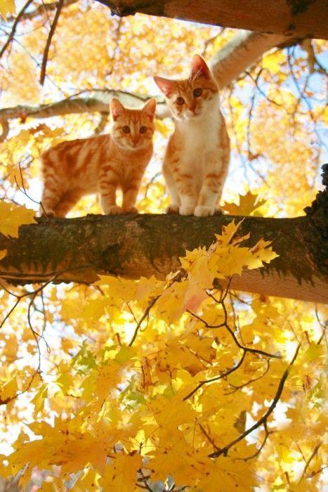 somewhatvintage:  (via Pinterest)  The kitties of autumn!