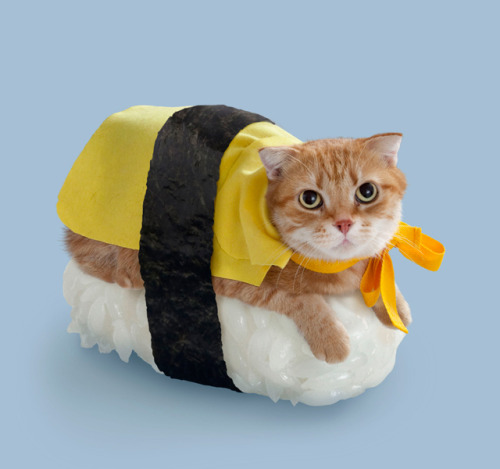 SUSHI CATS! (via Sushi Cats, A Cute Collection of Magical Felines Resting on Sushi Rice)