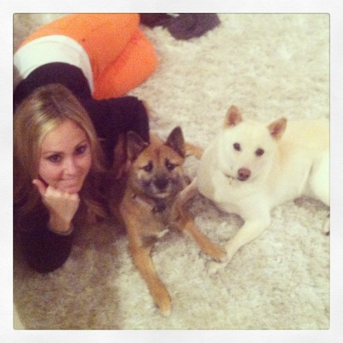 Chillin on the rug. Love my babies! #shiba #doggylove #cutedog #arentwecute