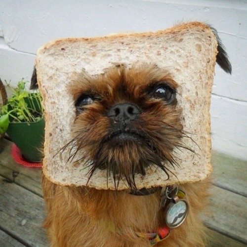 It's a dog eat bread world out there. - @digbyvanwinkle- #webstagram