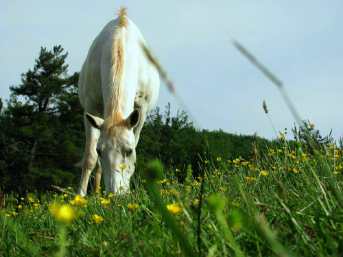 horsesornothing:  Summer is here by Morgan_Ayscue on Flickr.