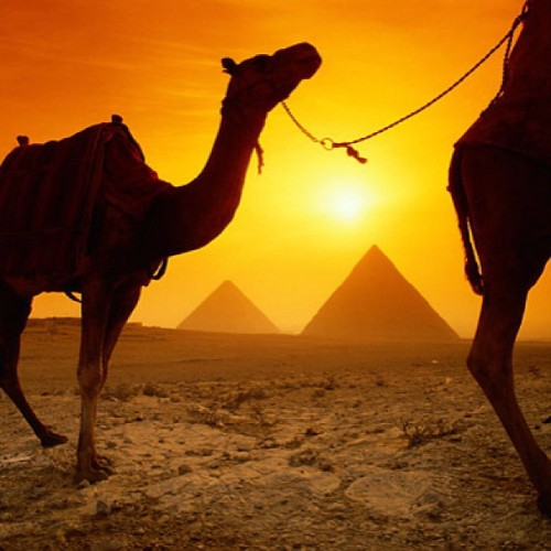 travelandlivin:  Pyramids of Giza, Egypt. #giza #egypt #africa #asia #travel #photo #adventures