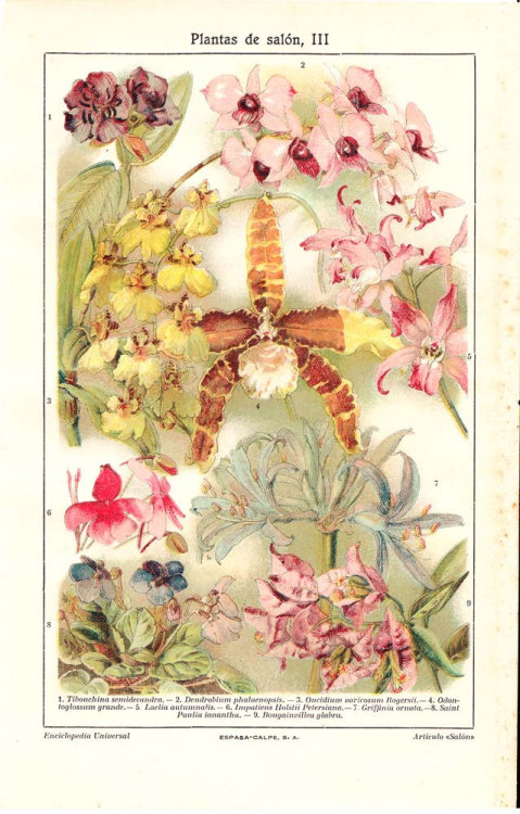 Houseplants Print  Orchids Botanical Chromolithograph 1923 Colorful at CarambasVintage http://etsy.me/YV9jPb