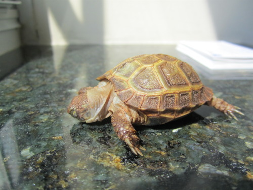 thewhimsyturtle:  Saturdays are for sleeping in the sun.