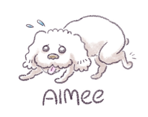 This is my other new dog, Aimee! She is also a toy poodle/bichon mix. She was born with a bum leg so she limps around most of the time. Unlike her sister Bella, Aimee is very shy and timid around new people. But Aimee is also very loving, and is always first to hop into my lap for pets. She doesn't play with toys, but she goes NUTS whenever I  am eating an apple. Apple slices are Aimee's favorite treat! Also, here is some pictures! Aimee 1, 2 Bella 1, 2