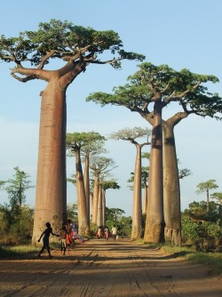 howiviewafrica:  Tree of Life.