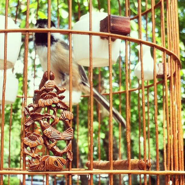 Delightful details (at Hua Mei Bird Garden)