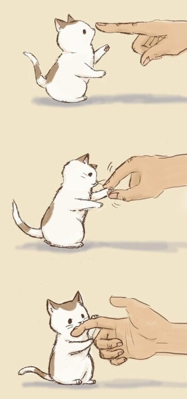 Katzen ohren