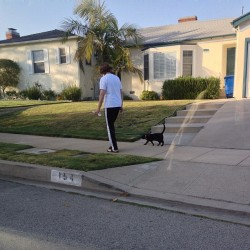 😂😂 this lady was walkin the cat like it was a vicious  pit bull