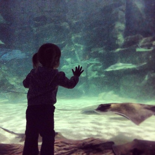 The stare down. @fgasca  (at Ripley's Aquarium)