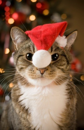 Merry Christmas from Santa Cat.