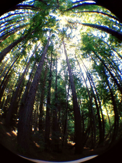 starryyeyed:  strawberry canyon, Berkeley