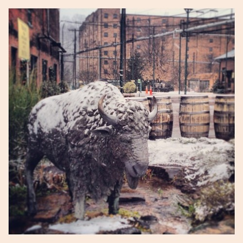 He looks a little cold today, by buffalotracedistillery