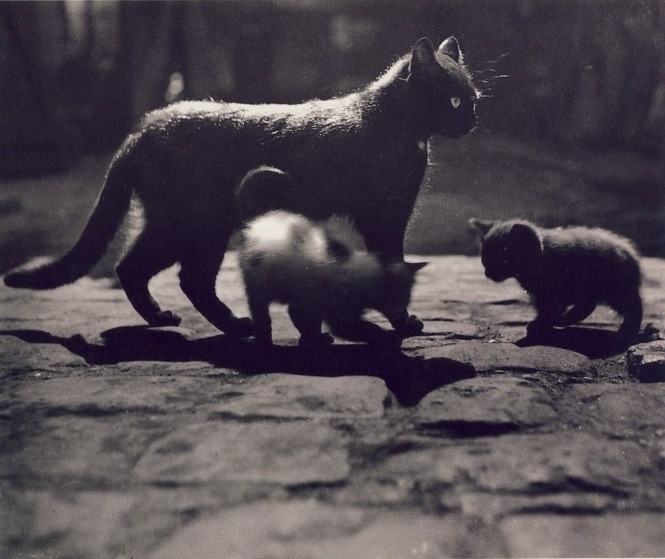 adanvc:  Cats, 1930s. by Brassaï