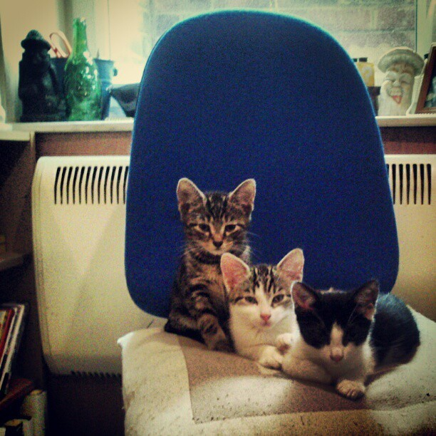 Family portrait time, pose everybody!  #cat#kitten#pet