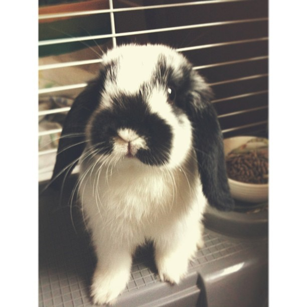 This is why I don't get any school work done. #sorryforthebunnypicture #notreallysorry