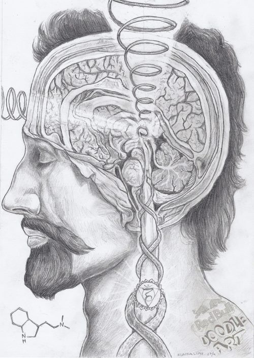 age-of-awakening:  Understanding what psychedelics do to the human psyche…in this case, DMT