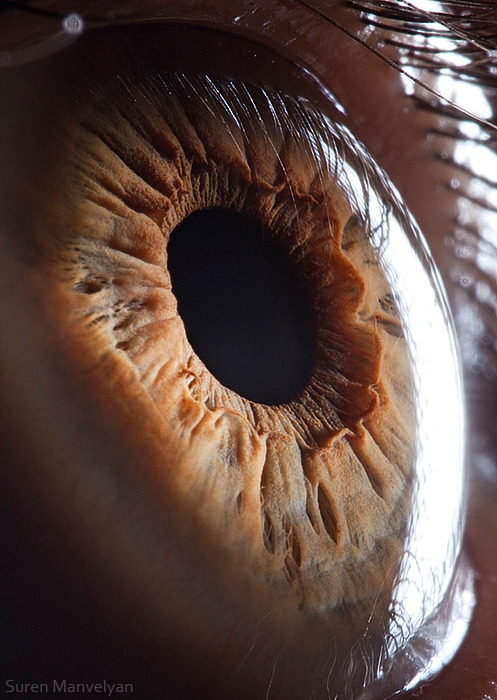 laughingsquid:  Your Beautiful Eyes, Extreme Close-Up Photos of Human Eyes  Whoa.