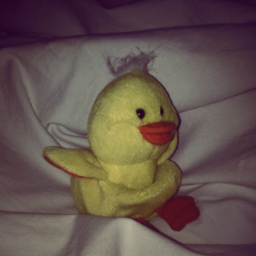#sleep #duck #sunshine #goodmorning