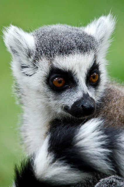tiny-creatures:  Yorkshire Wildlife Park 22/09/11 by Dave learns his Dig SLR? on Flickr.