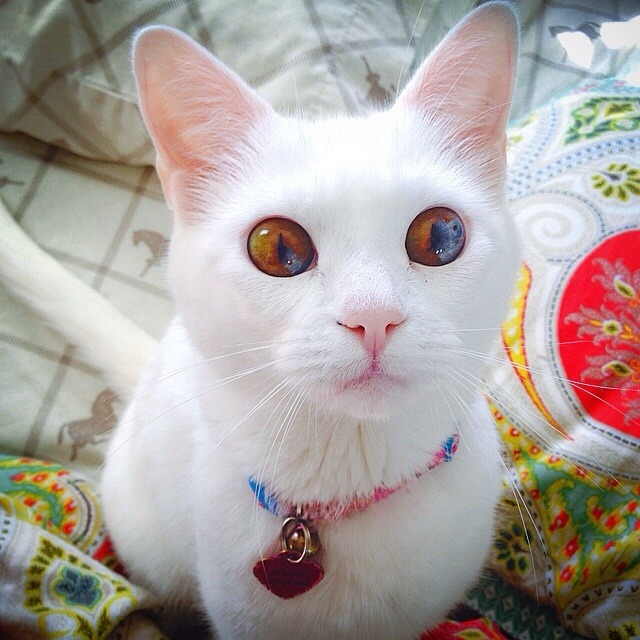 systemofadowny:  awwww-cute:  People always tell me my cat has the most beautiful eyes   WOAH