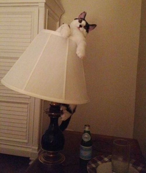 Go to bed, Cat…You're drunk!!