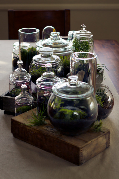 Down the line of Terrariums (by joshleo)