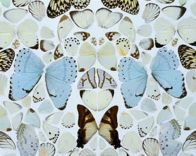 b22-design:  Damien Hirst - Sympathy in White Major. Absolution II - 2006