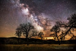 distant-traveller:  Cottonwood trees and the Milky Way Image credit: Randy Halverson/Dakotalapse