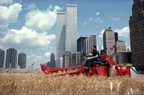 wandrlust:  Wheatfield – A Confrontation: Battery Park Landfill, Downtown Manhattan. 1982 — Agnes Denes