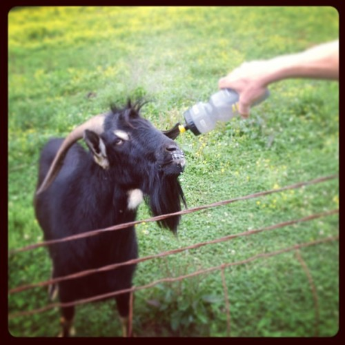 epiccustoms:  @floatinglegs hydrating our new buddy today with #infinitsportsdrink #BBBaaaa