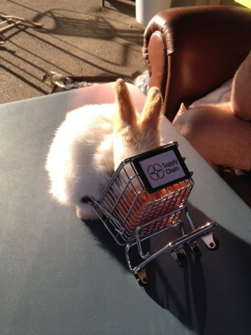 buzzfeed:  Oh my God the shopping cart is full of carrots.   I can't handle the cuutteeeee *pukes*